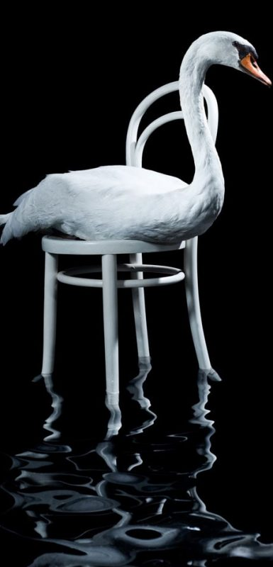 Swan-on-a-chair-over-water-min